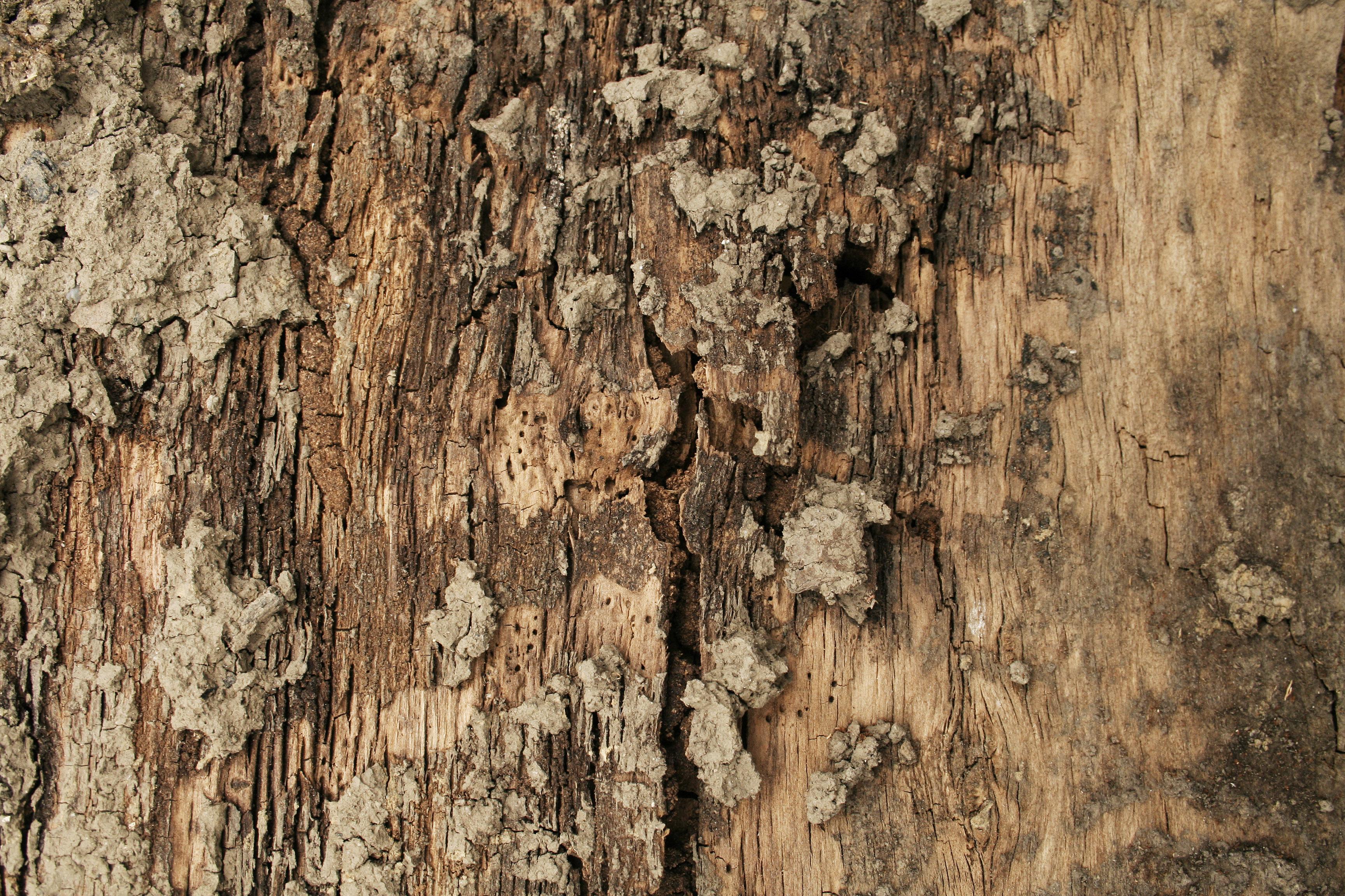 Download – wood brown tree bark texture